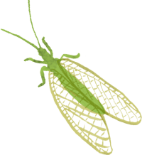 InsecteB